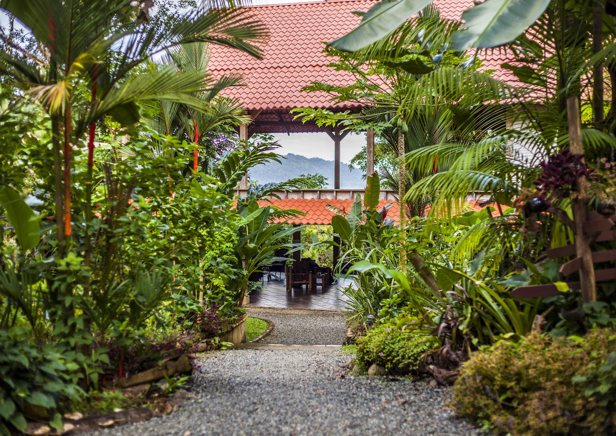 Welcome to Cashew Hill Jungle Lodge