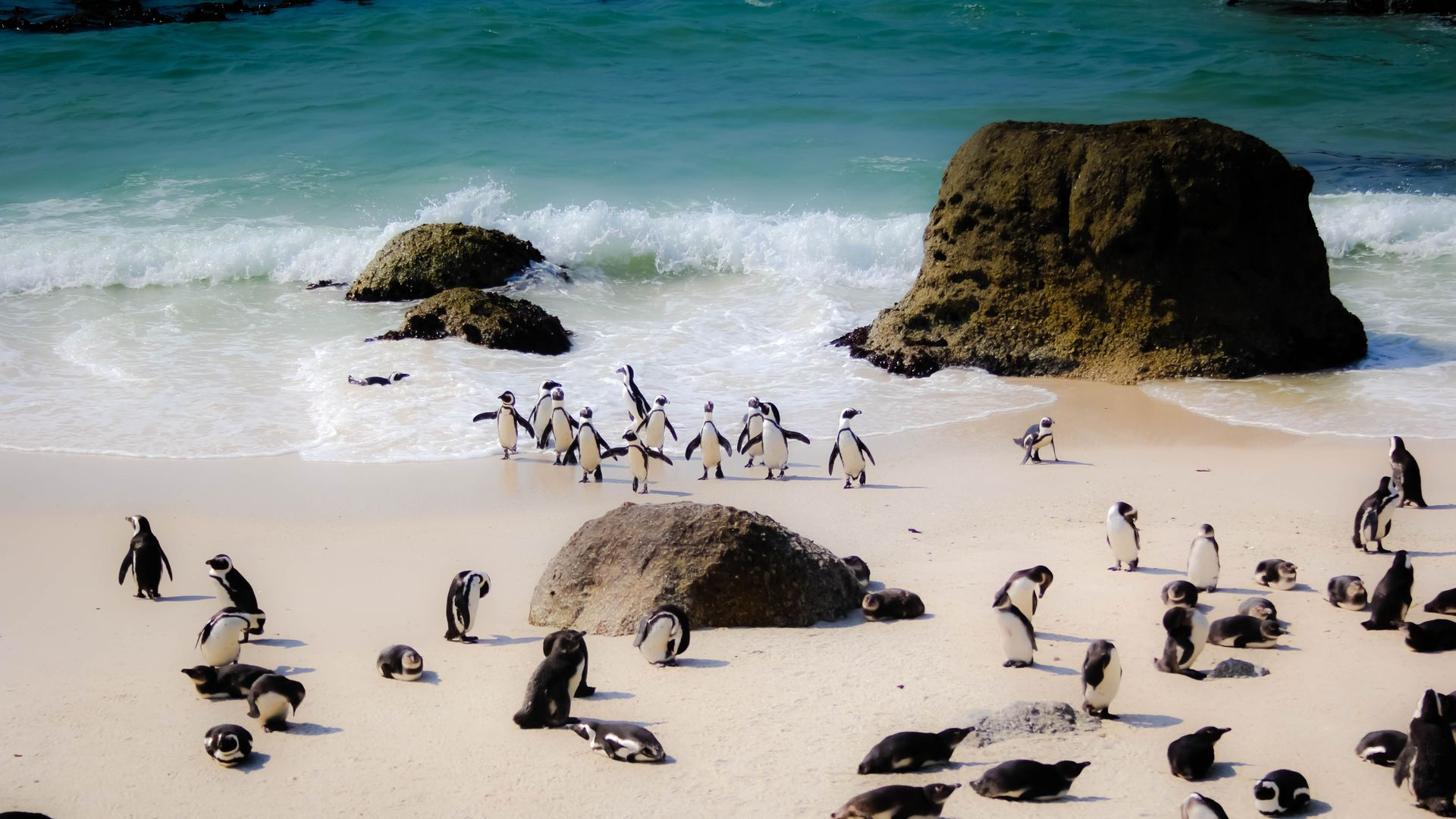 Penguins-at-Boulders-Beach-Cape Town-South-Africa.jpg