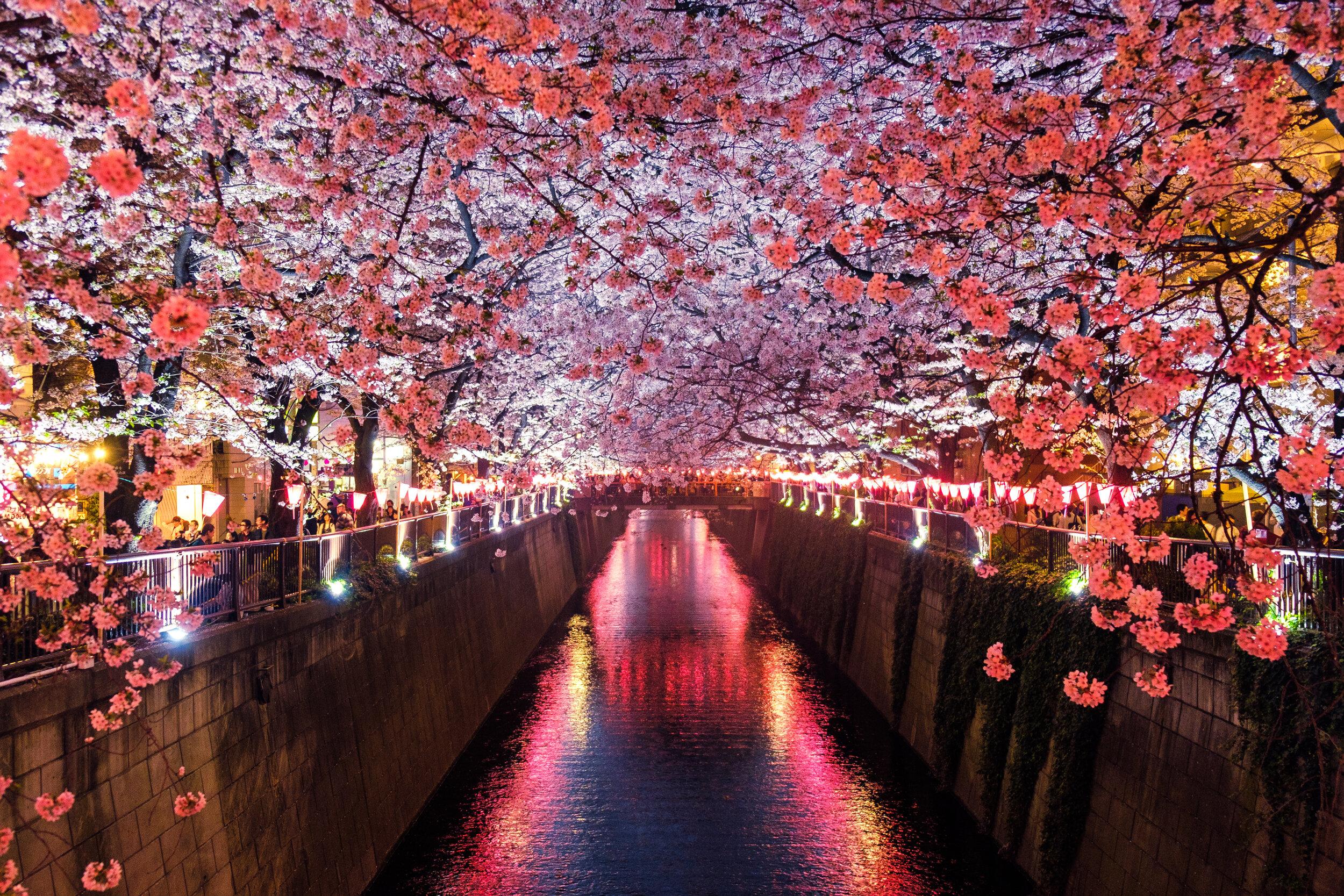 Japan Tourism go visit