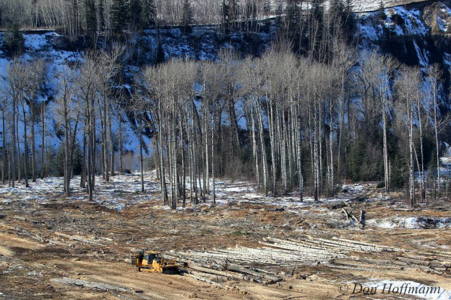 Fight site C - photo3.png