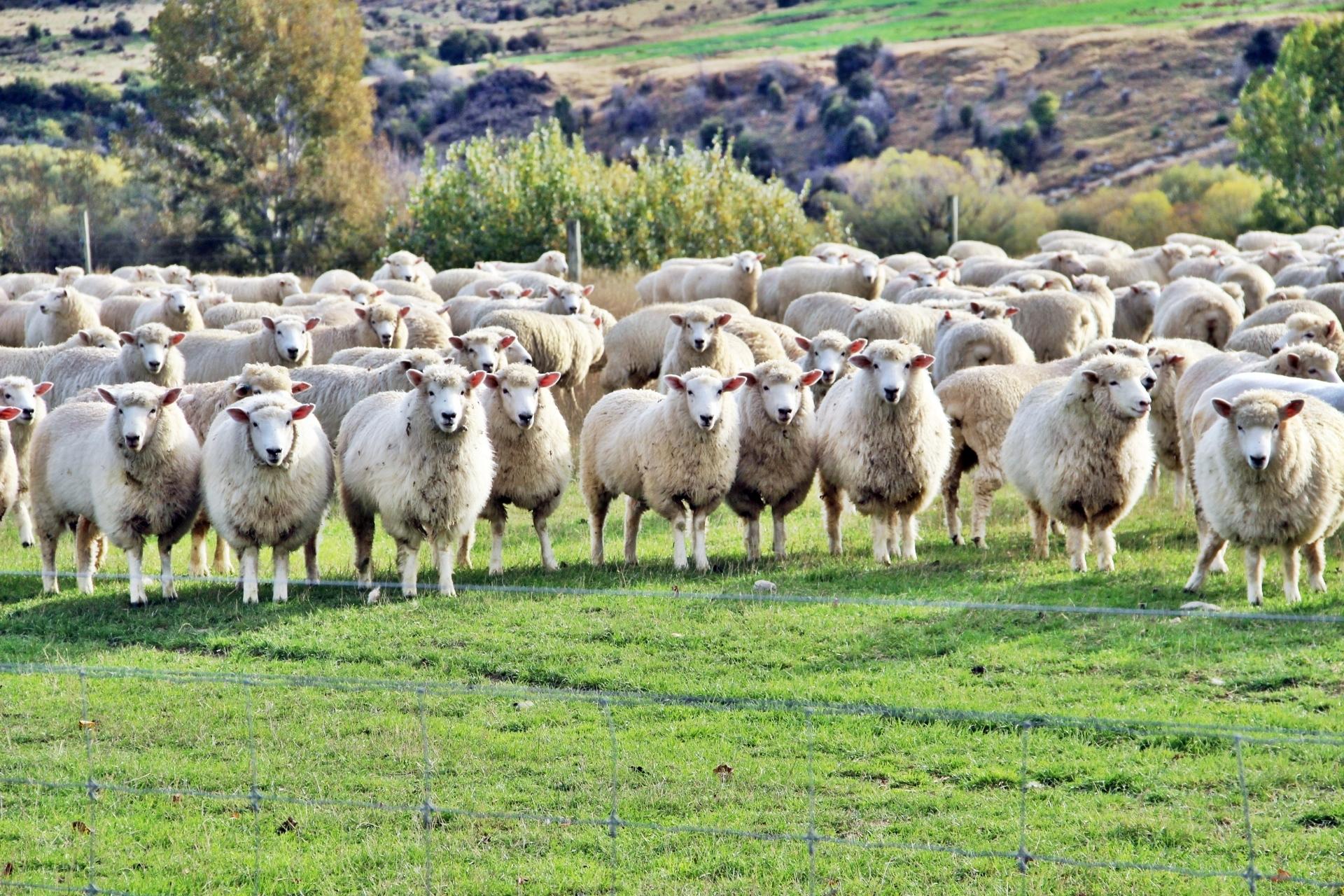 Staff 360   Livestock Recruitment   Latest Jobs