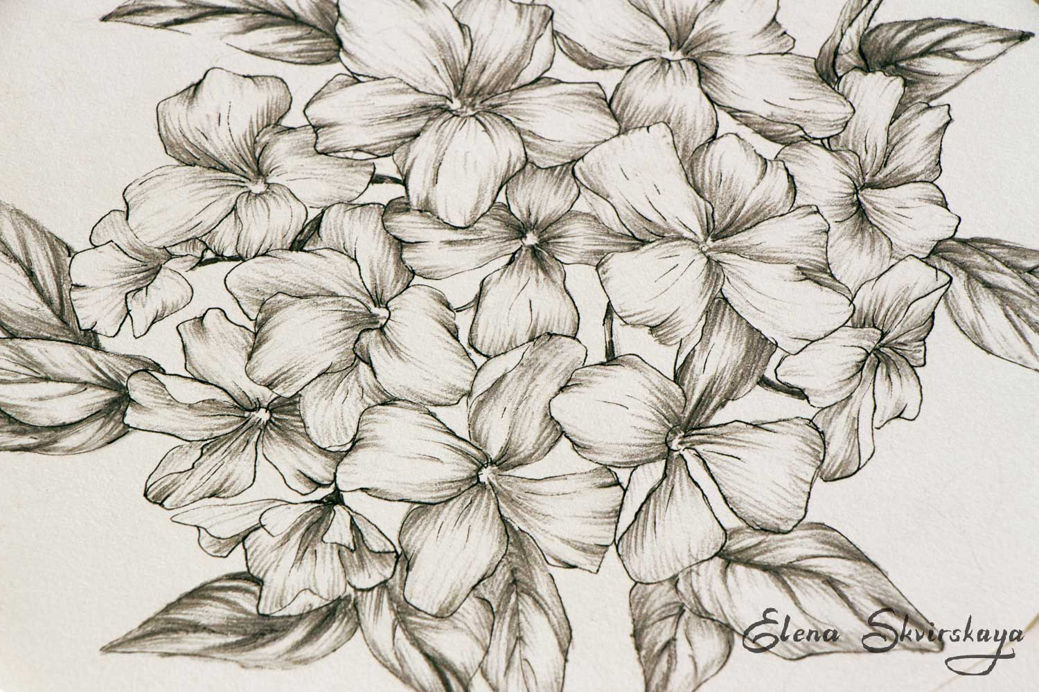 sketch of a flowers bunch, graphite and ink pen on paper
