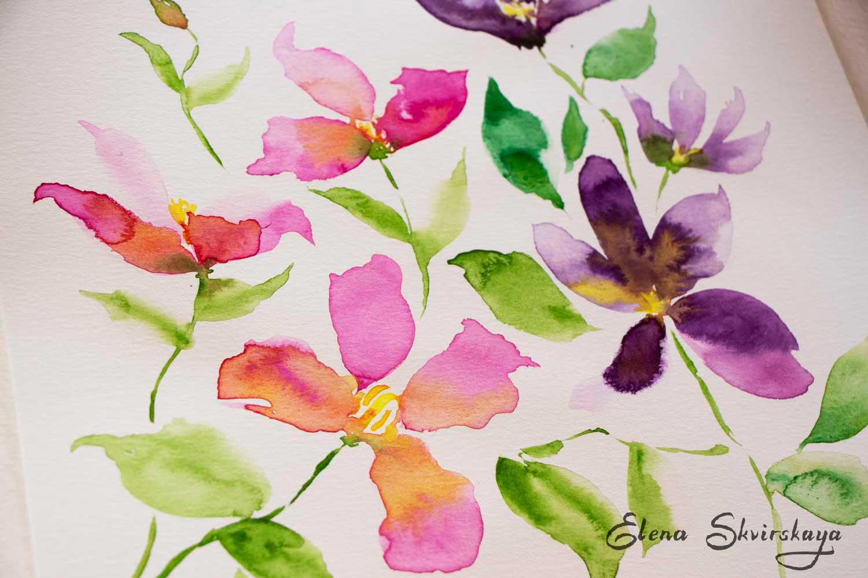 watercolor floral sketch, clematis, loose technique