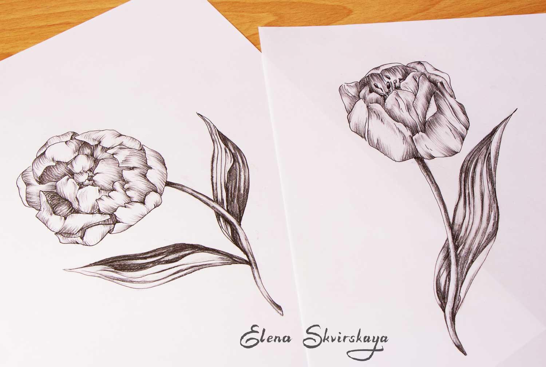 tulips, pencil, graphite on paper, motifs for a textile design