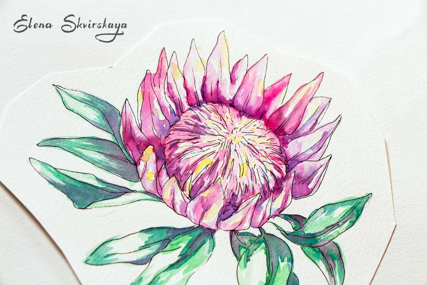 protea, watercolor markers on paper, motif for a surface print design