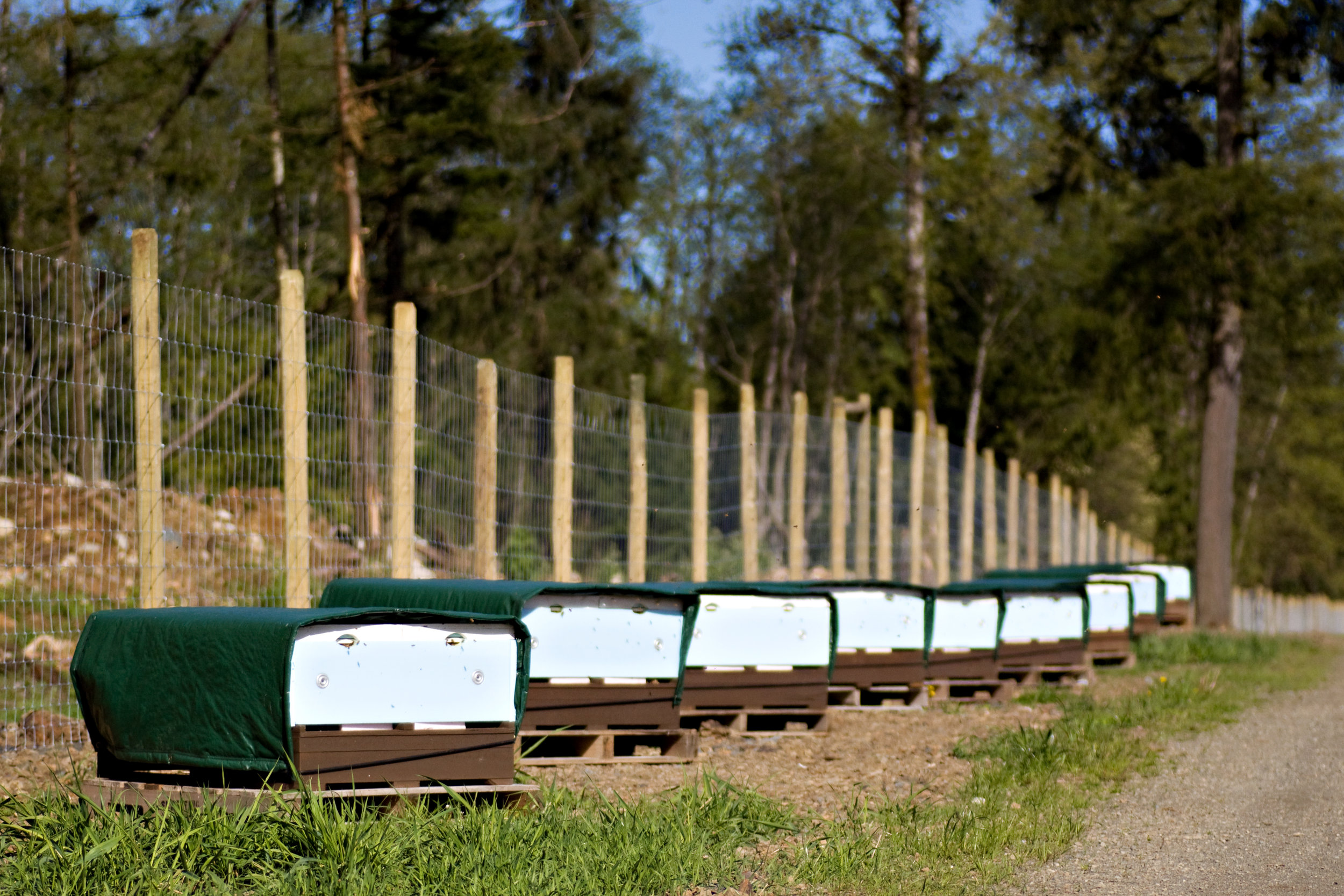 Contact Us - Be sure to come visit us here at the farm. Our Honey Stand is open 24/7, it is a cash based stand built on the honour system.