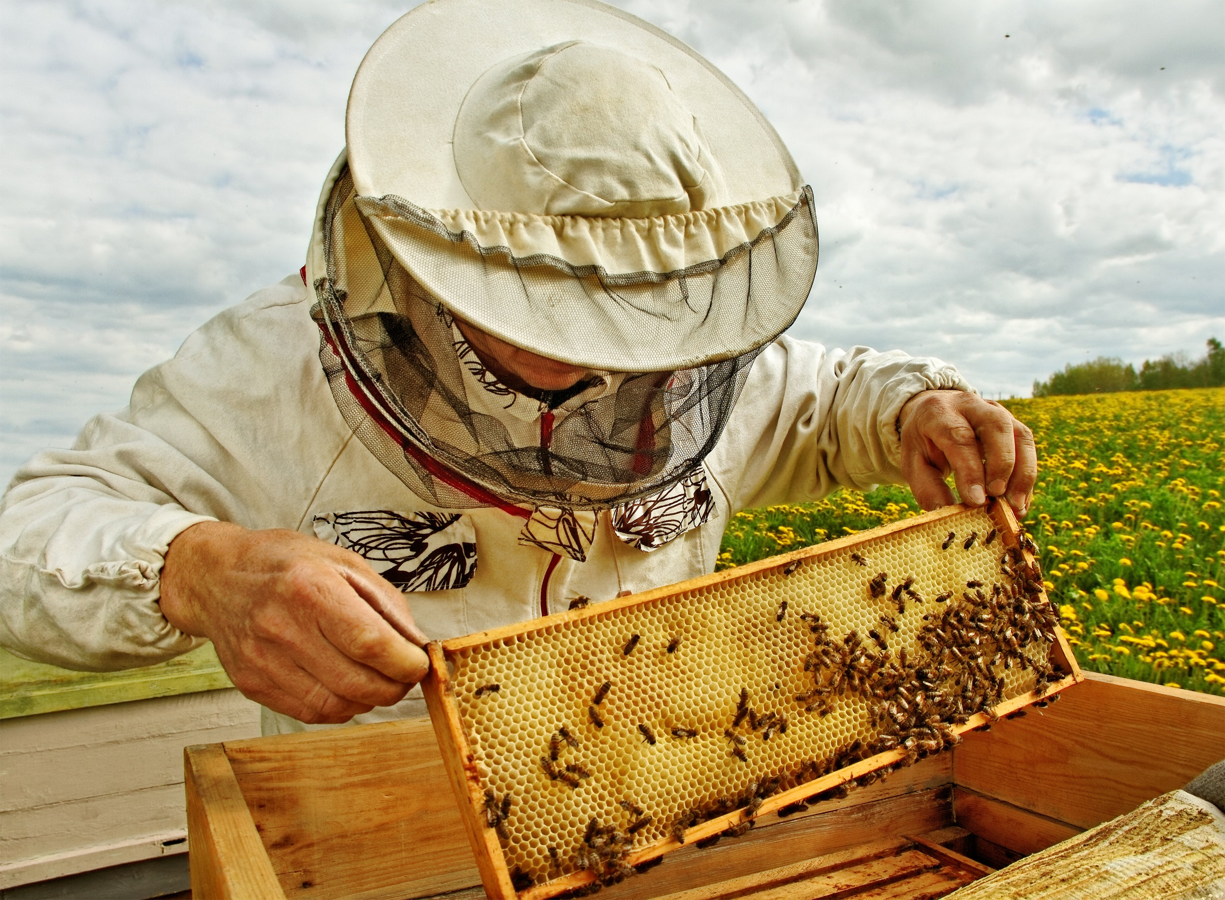 Bees For Sale - From your local Vancouver island bee supplier.