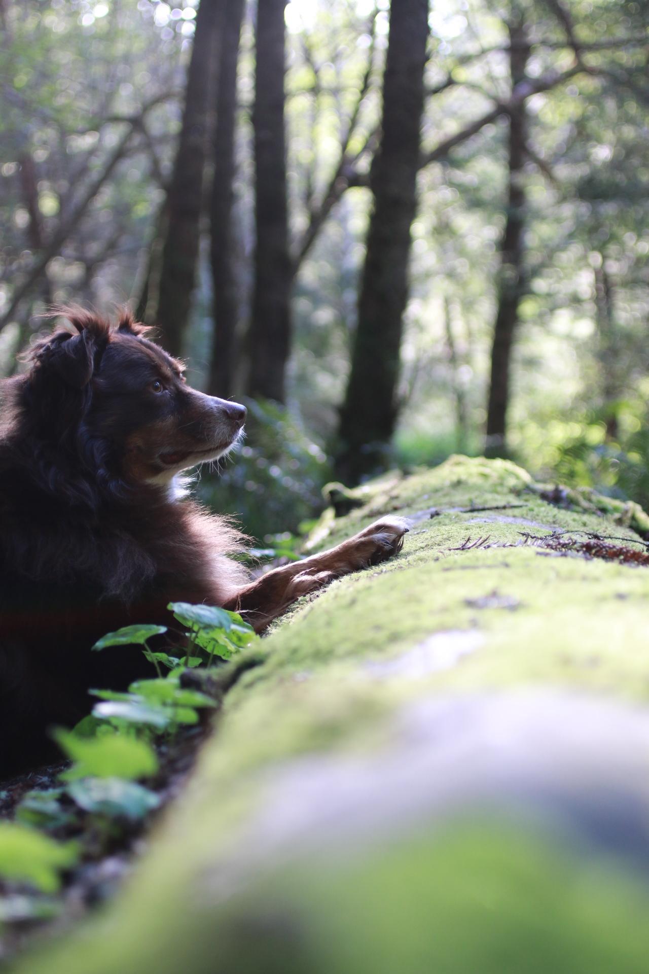 My fluffy dog, bear.