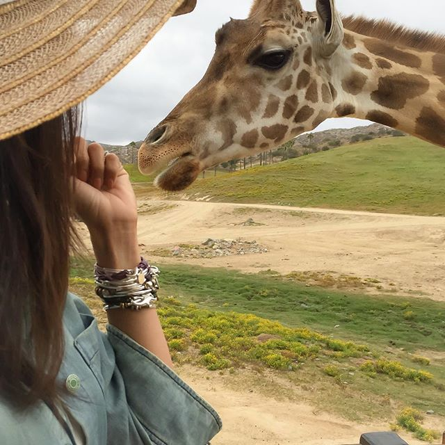 Enjoy a relaxing visit to your local zoo. Feeding a giraffe with the  Infinity wrap bracelet  stacked with the  Lizzy Classic 4-strand  and  Trixy with Silver Tree of Life Pendant w Removable Clasp .