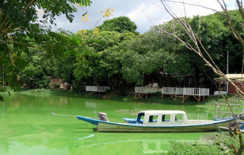 Kandawygi Lake - glowing green
