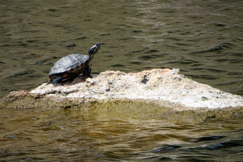 The lake is turtle-y gorgeous (sorry!)