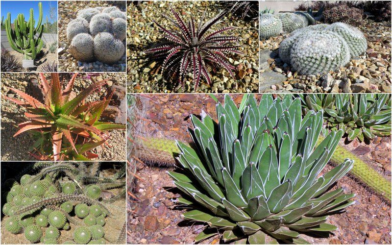 A few of the 100 cacti pictures we took