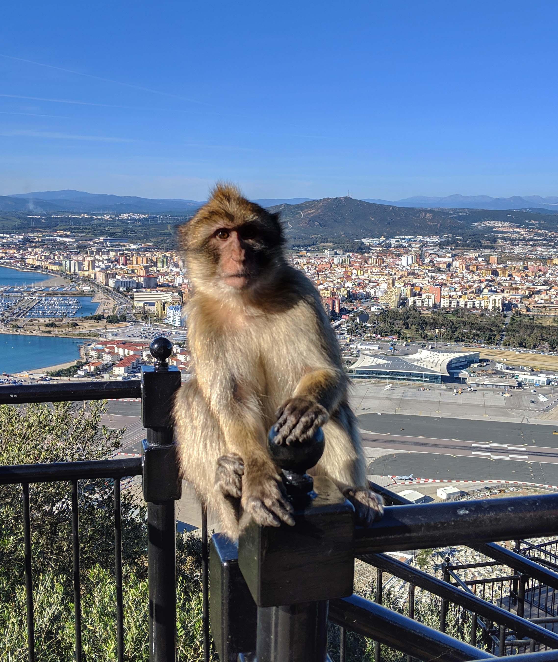 Gibraltar apes 2.jpg