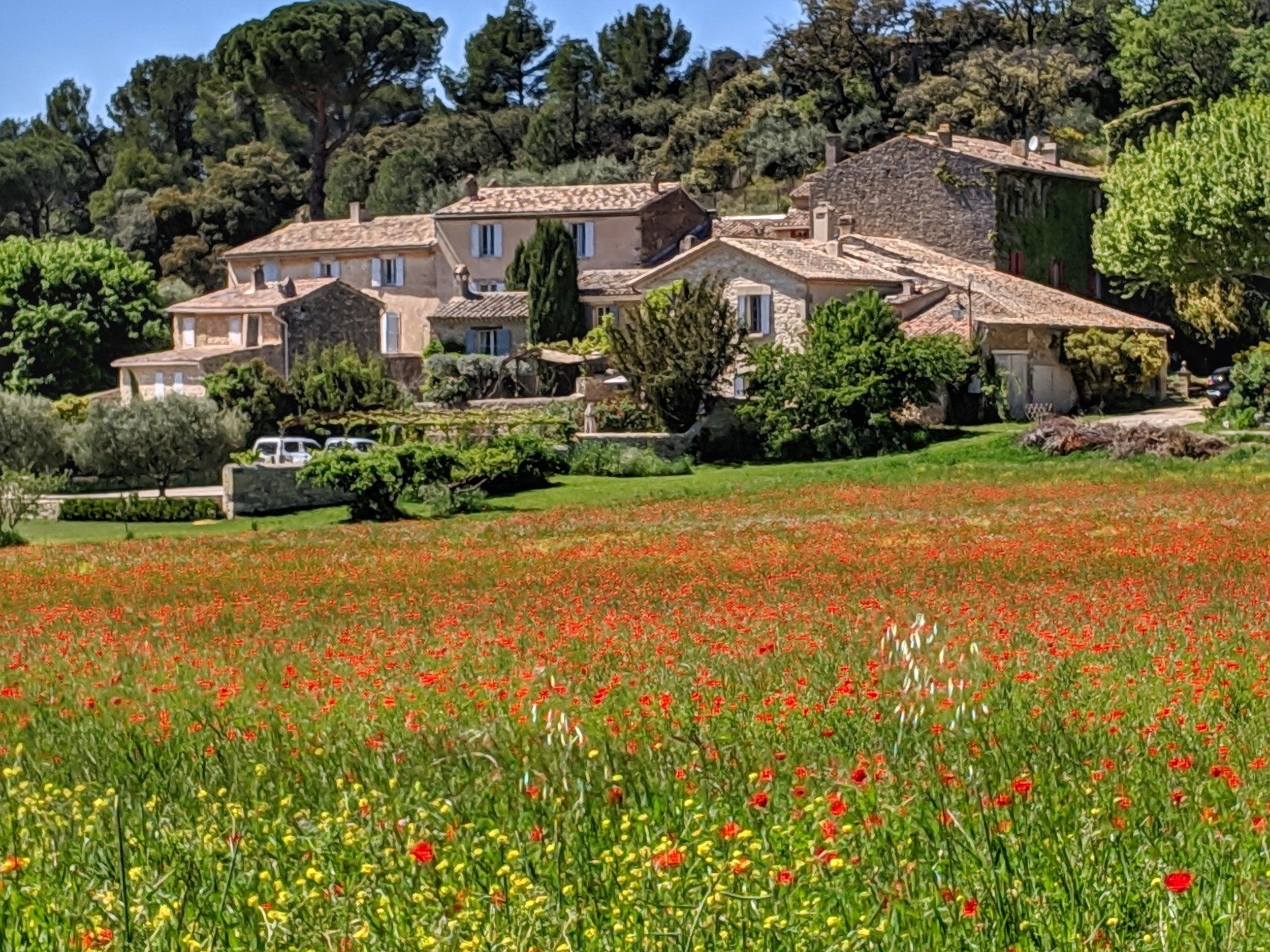 Poppy Fields at Lourmarin