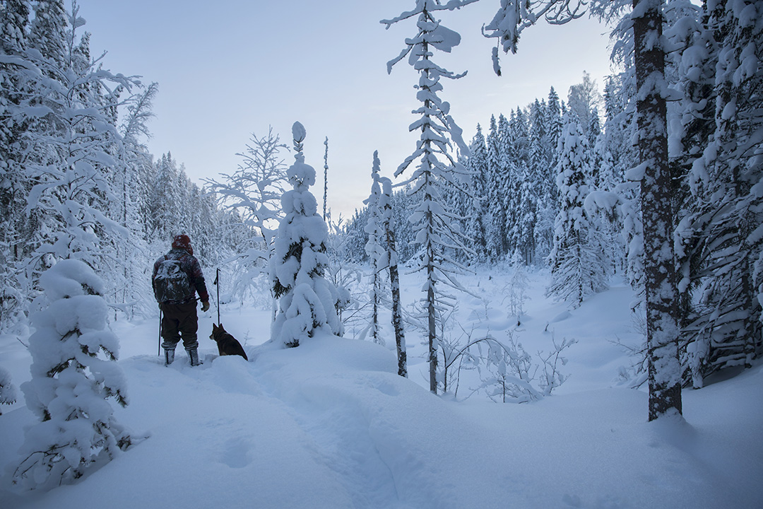 Skiing north-karelia