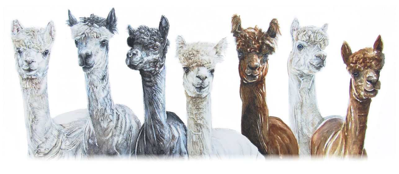 Alpacas - Mixed Media Original Painting by Kate Simpson