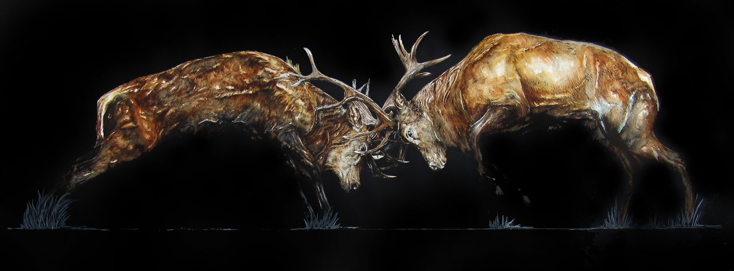 'The Clash' Stags Fighting