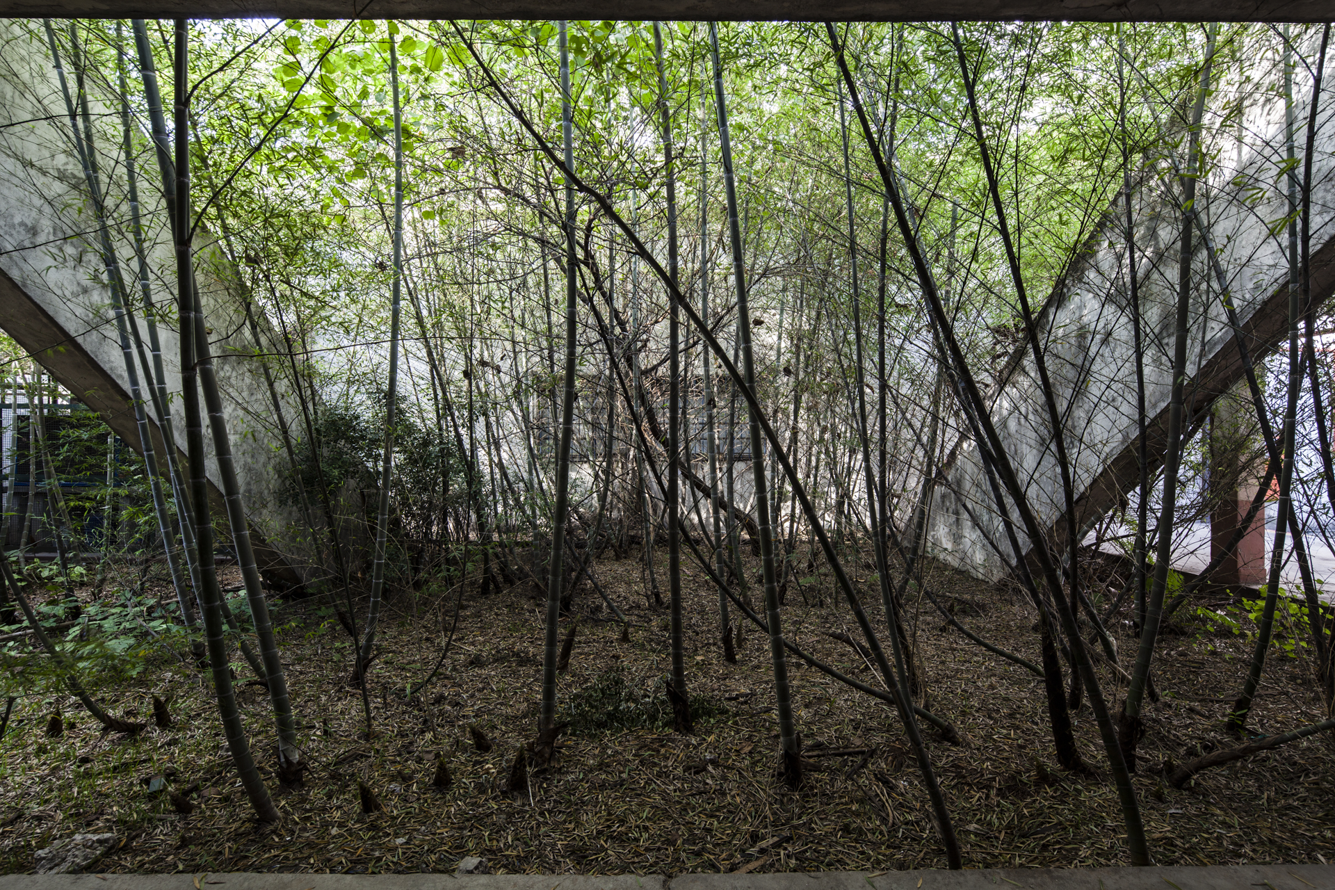 SERIES - abandono-11.jpg