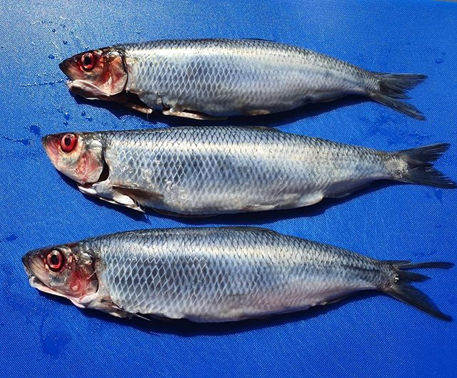 Afternoon Derry City! Hope you are all having a beut day!  Got these Wee Silver Darlings on the menu tonight, BBQed whole eat the bones and all✌🏼. . . . . #silverdarlings #herring #fresh #local #pykenpommes #fish #bbq #kopa #cookingwithcoals #saturdayvibes #57strandrd