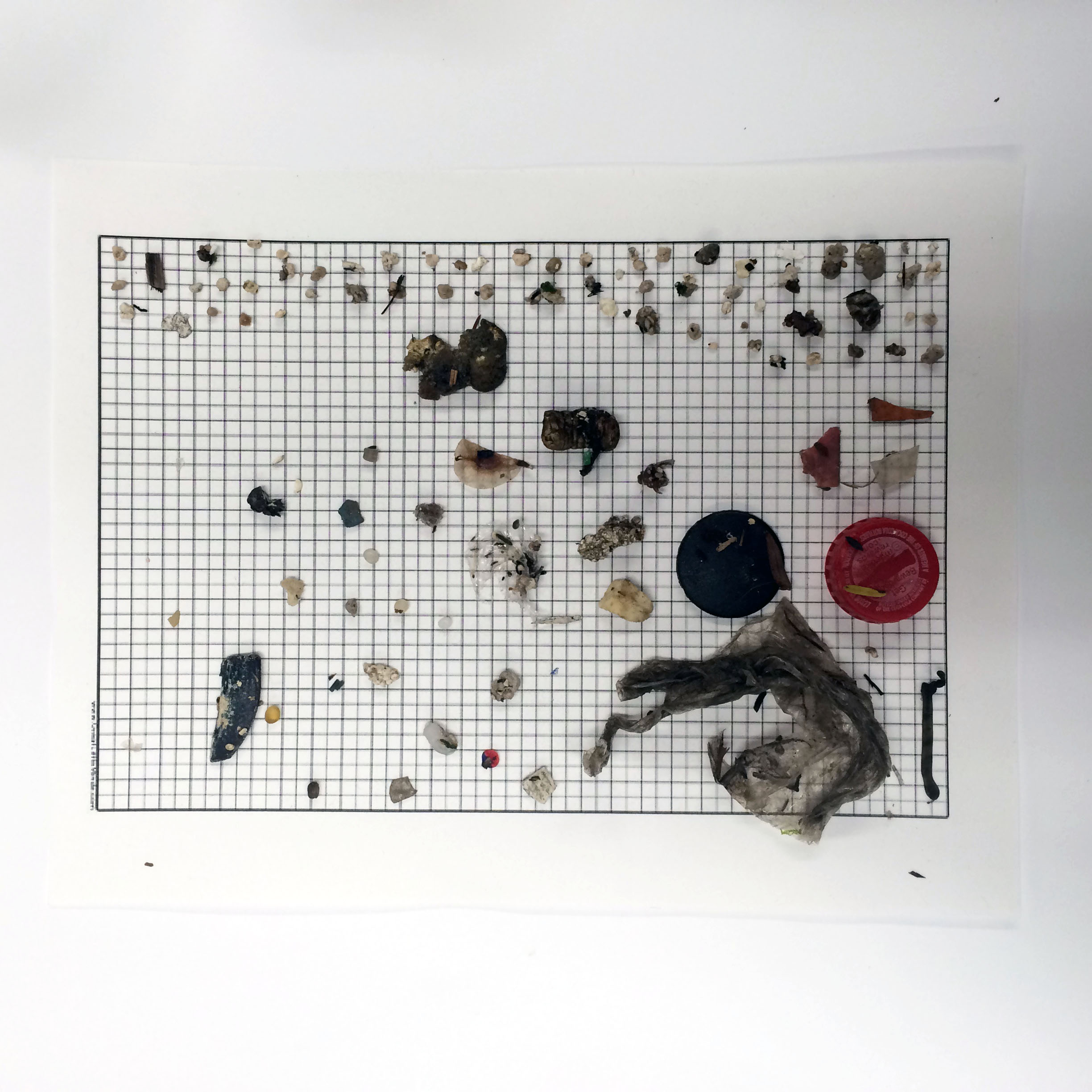 - Sort the inorganic and organic material using tweezers from the filter or mesh and transfer them onto the .5mm grid paper.