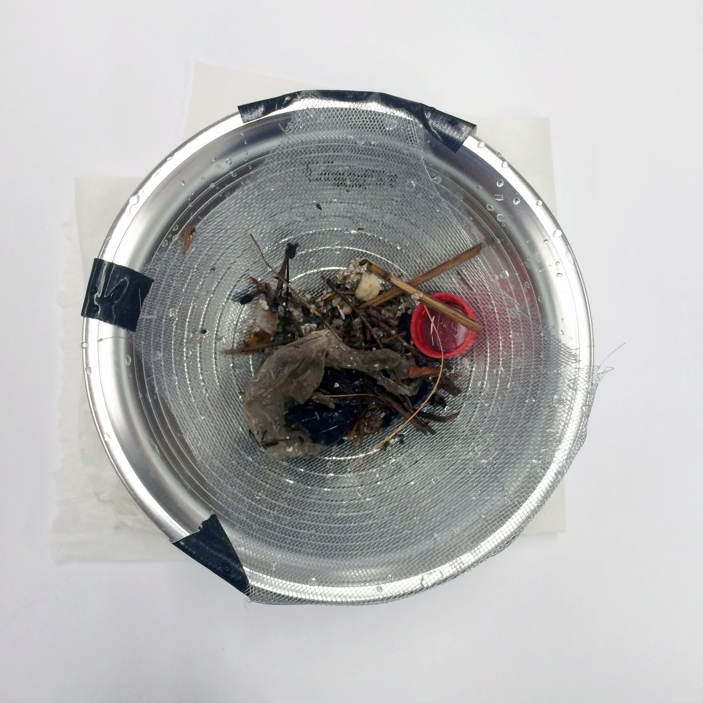 - Let your the sample dry overnight on the mesh strainer.