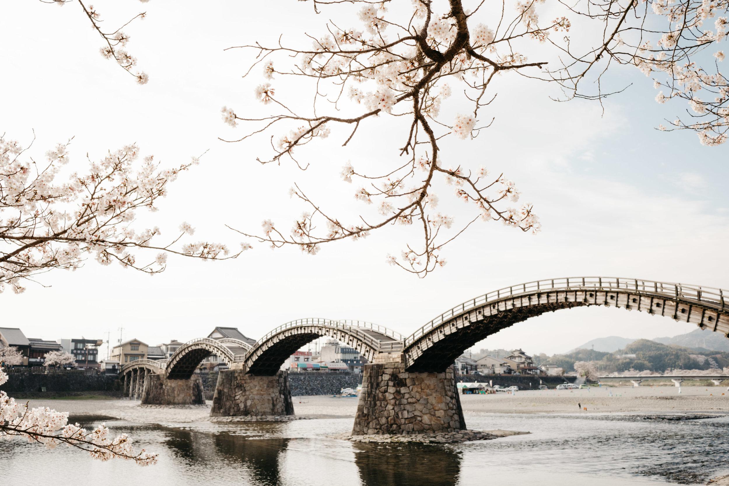 iwkauni-kintai-bridge-cherry-blossoms-photo-by-samantha-look.jpg