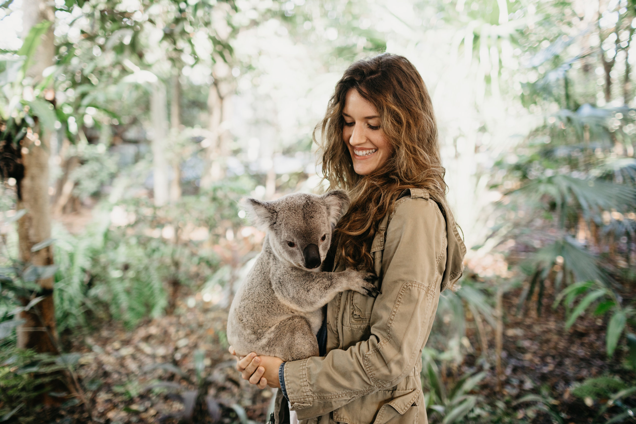 brisbane_lone_pine_koala_photo_by_samantha_look.jpg