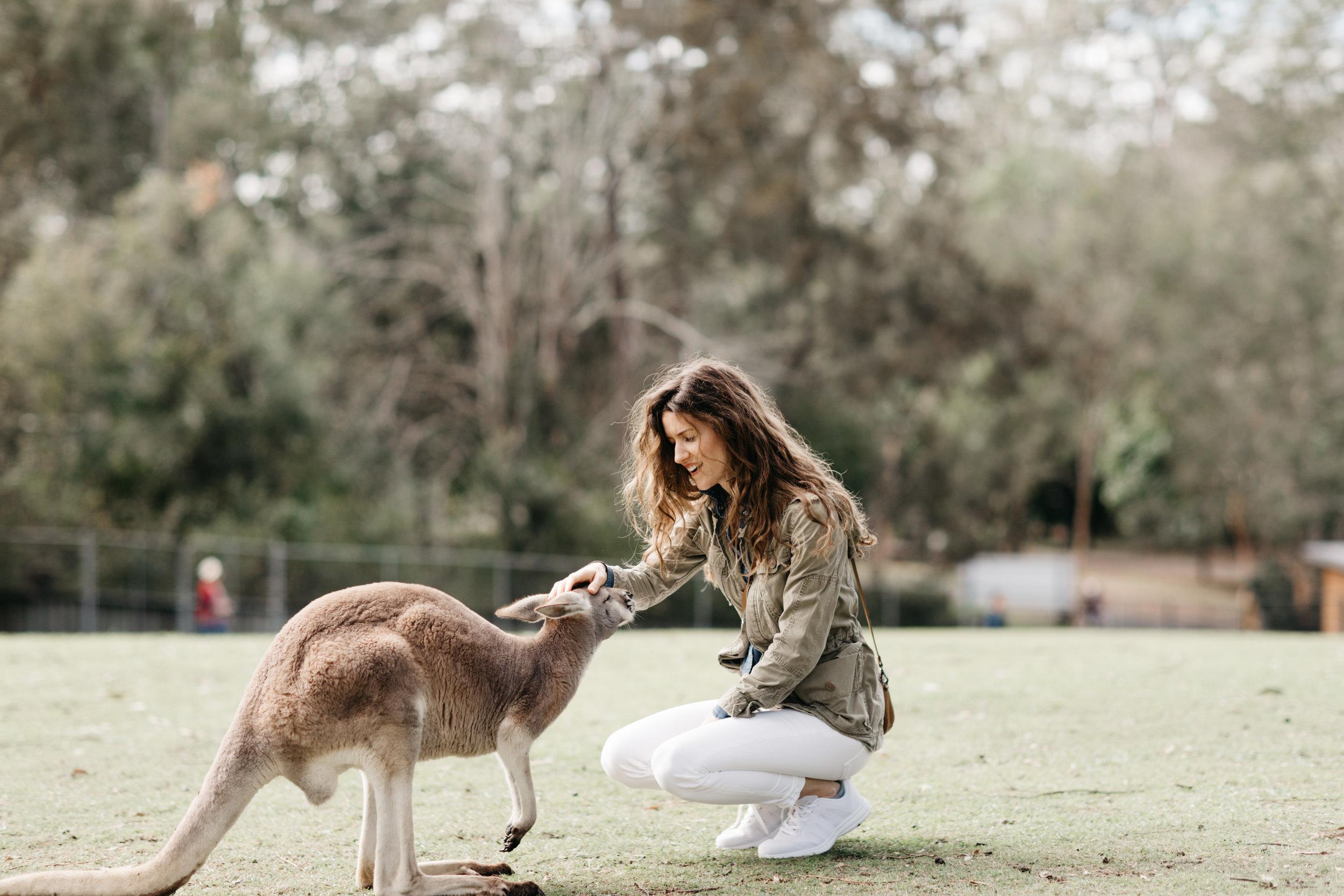 brisbane_lone_pine_kangaroo_photo_by_samantha_look.jpg