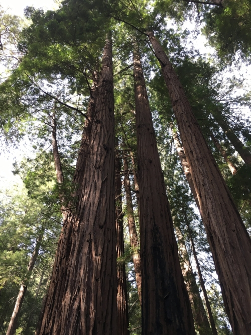 It's not hard to have some perspective while standing next to 200 foot tall, 1,000 year old trees.