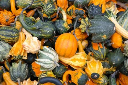 pumpkins-228474_1920.jpg