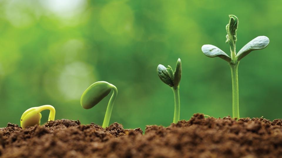 eazy_grow_lights_Plantsgrowinginstages_RGB_Web.jpg