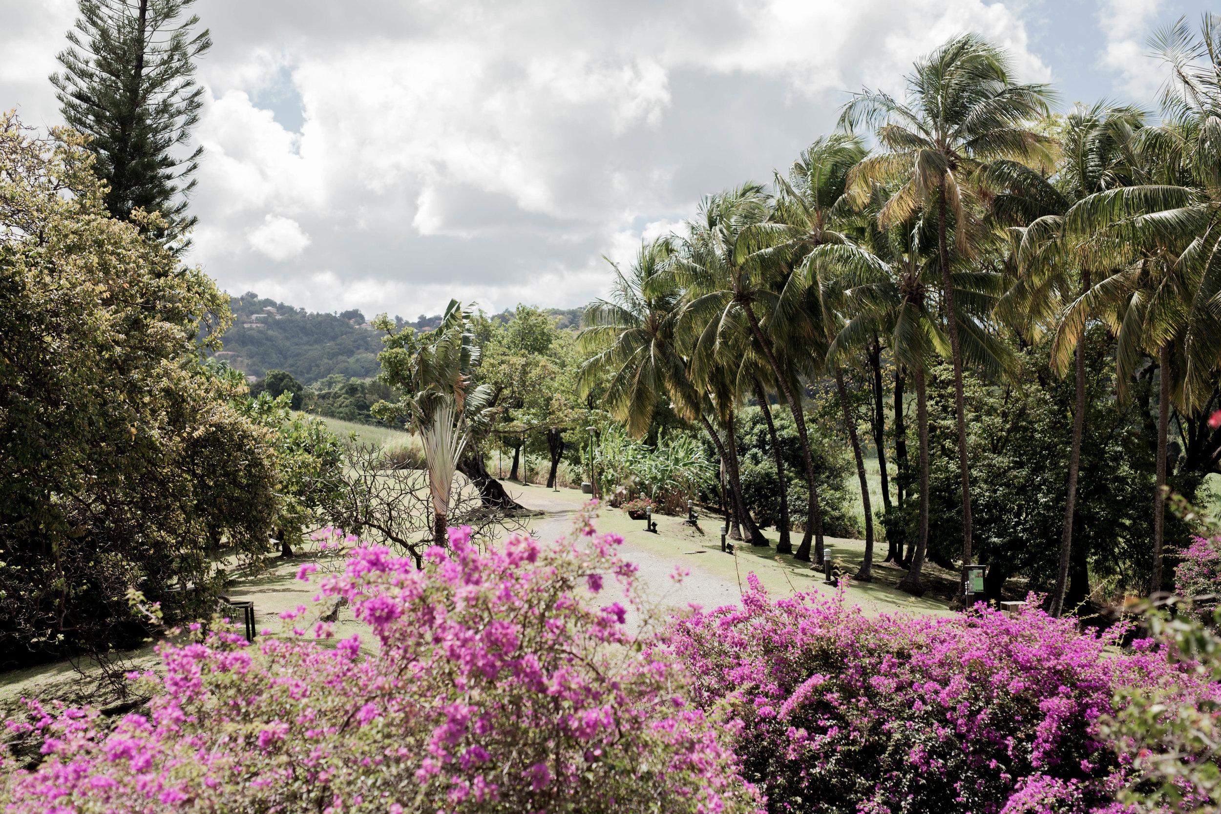 Martinique_LindsayCox
