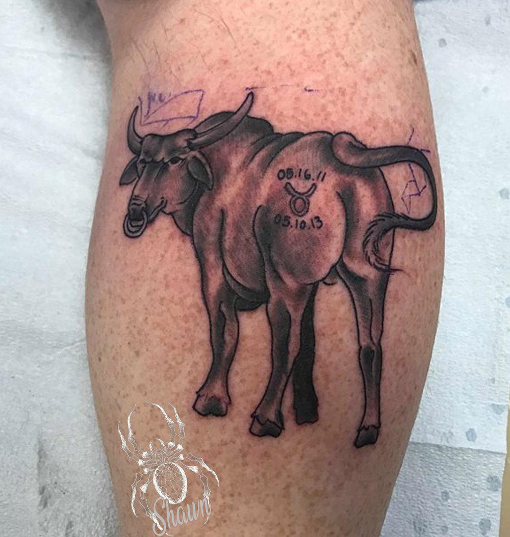 Bull+Shawn+.jpg