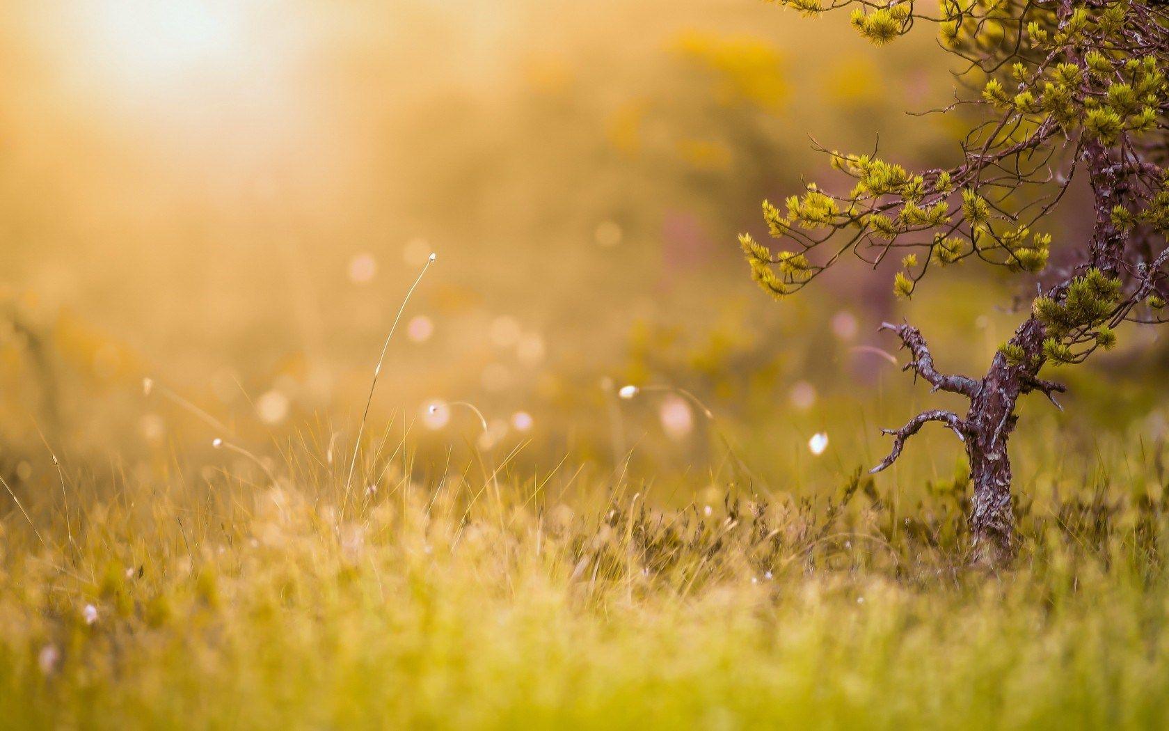 morning-sun-nature-wallpaper.jpg