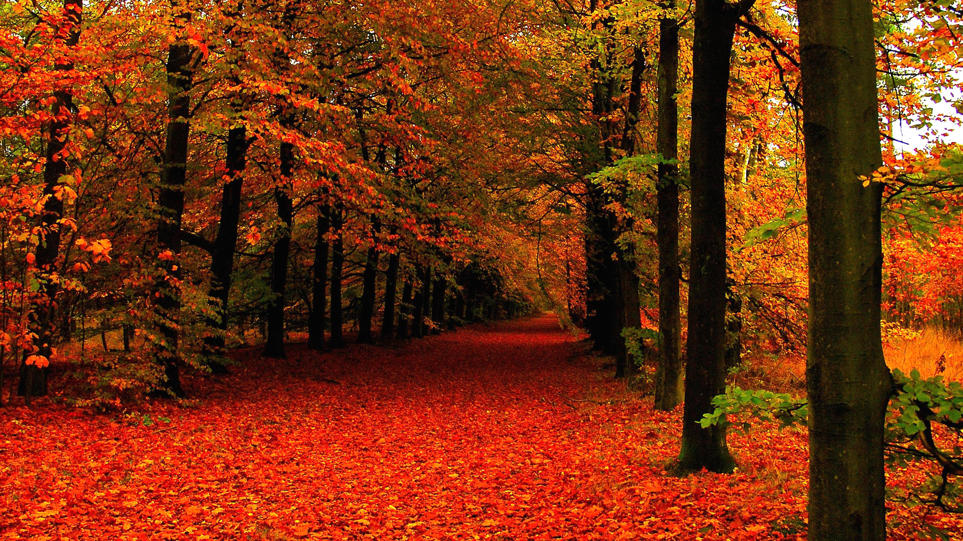 fall-wallpapers-tumblr-wallpaper-high-definition-54374852.jpg