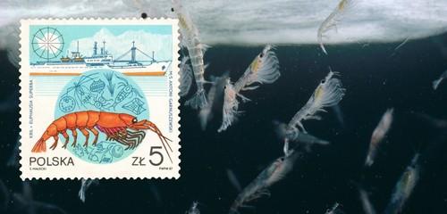 Krill seekers