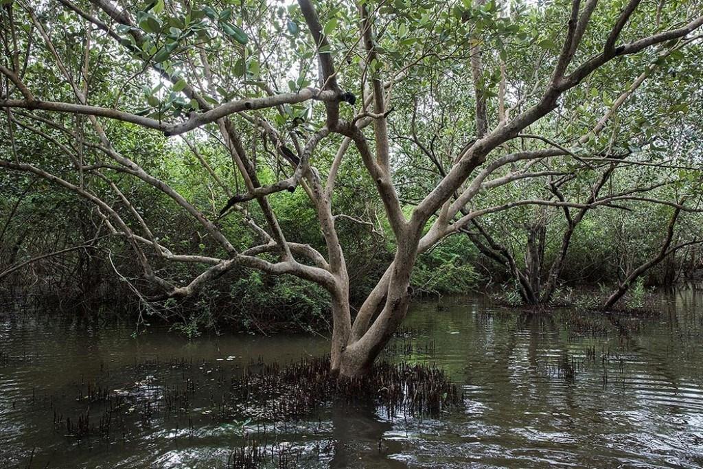 Why Myanmar jailed mangrove activists
