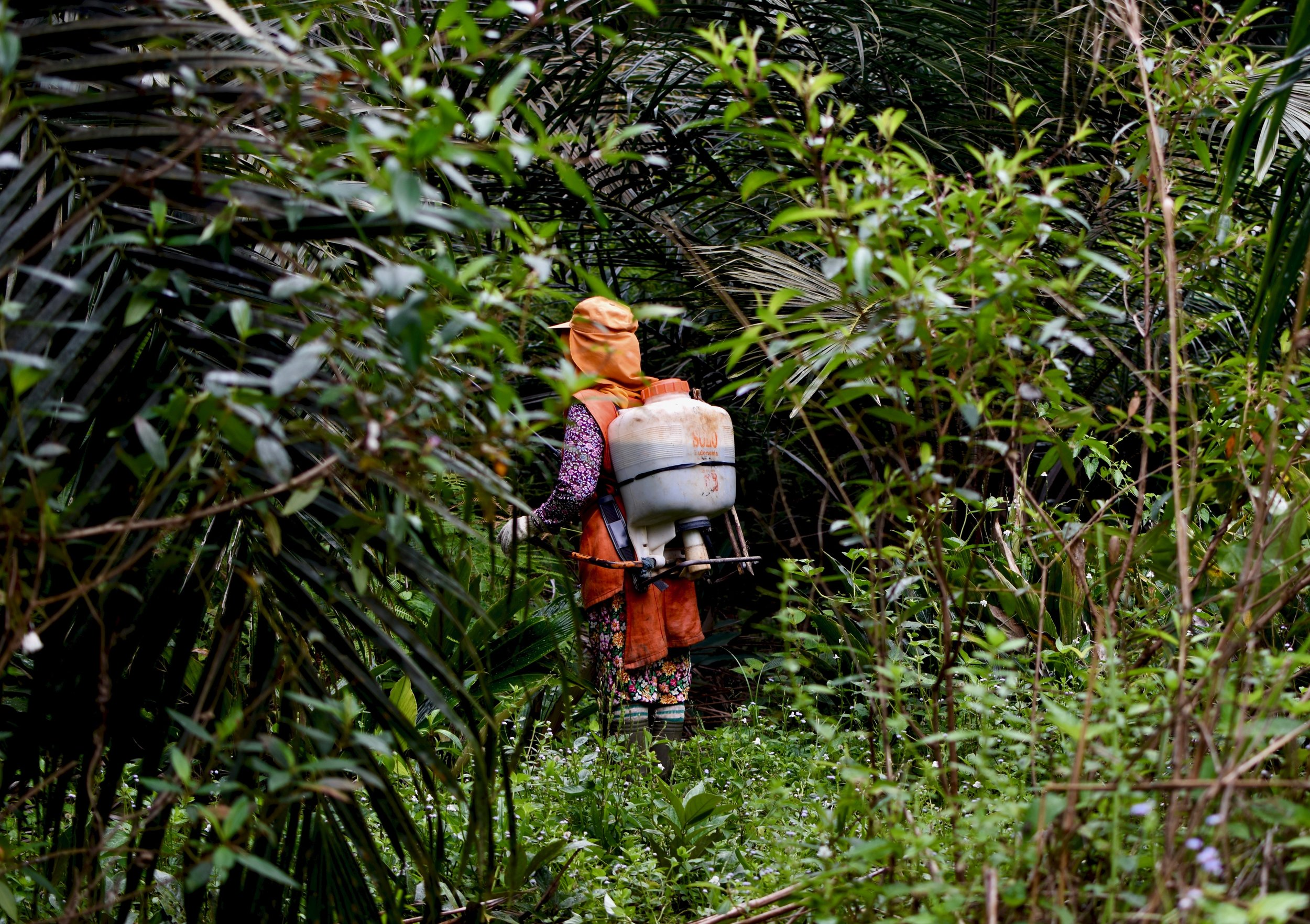 'I've never been normal again': Indonesian women risk health to supply palm oil to the West