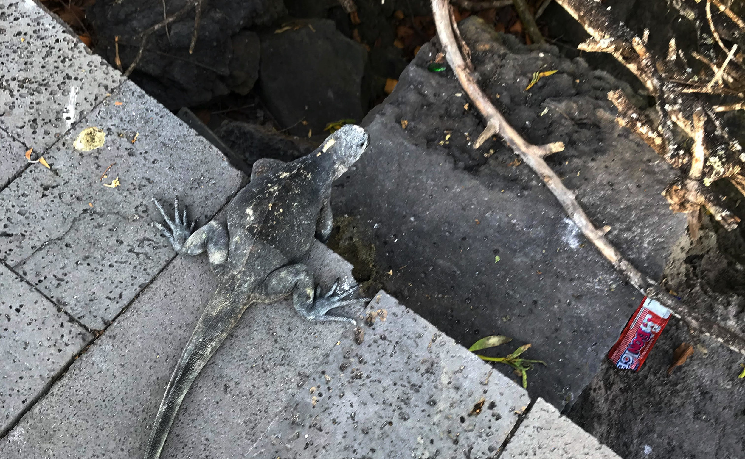 Trash in the Galápagos reveals the dark side of ecotourism