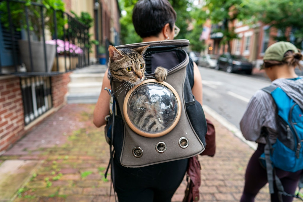 Does Fluffy really want to be an adventure cat?