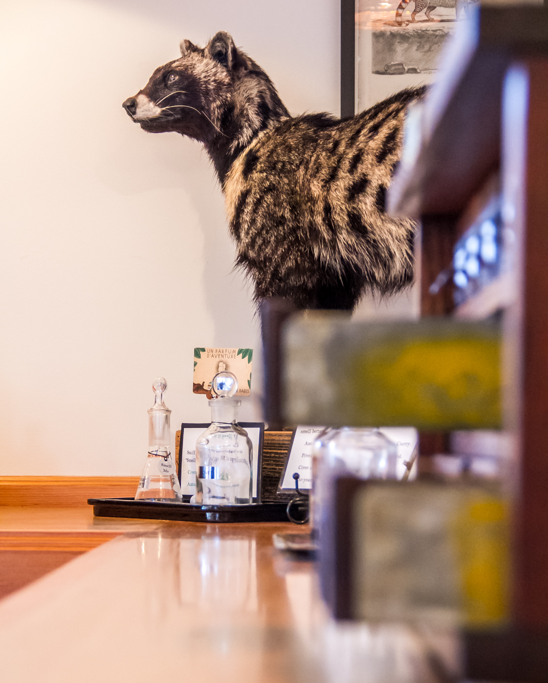 100 year old taxidermy civet at the Aftel Archive of Curious Scents