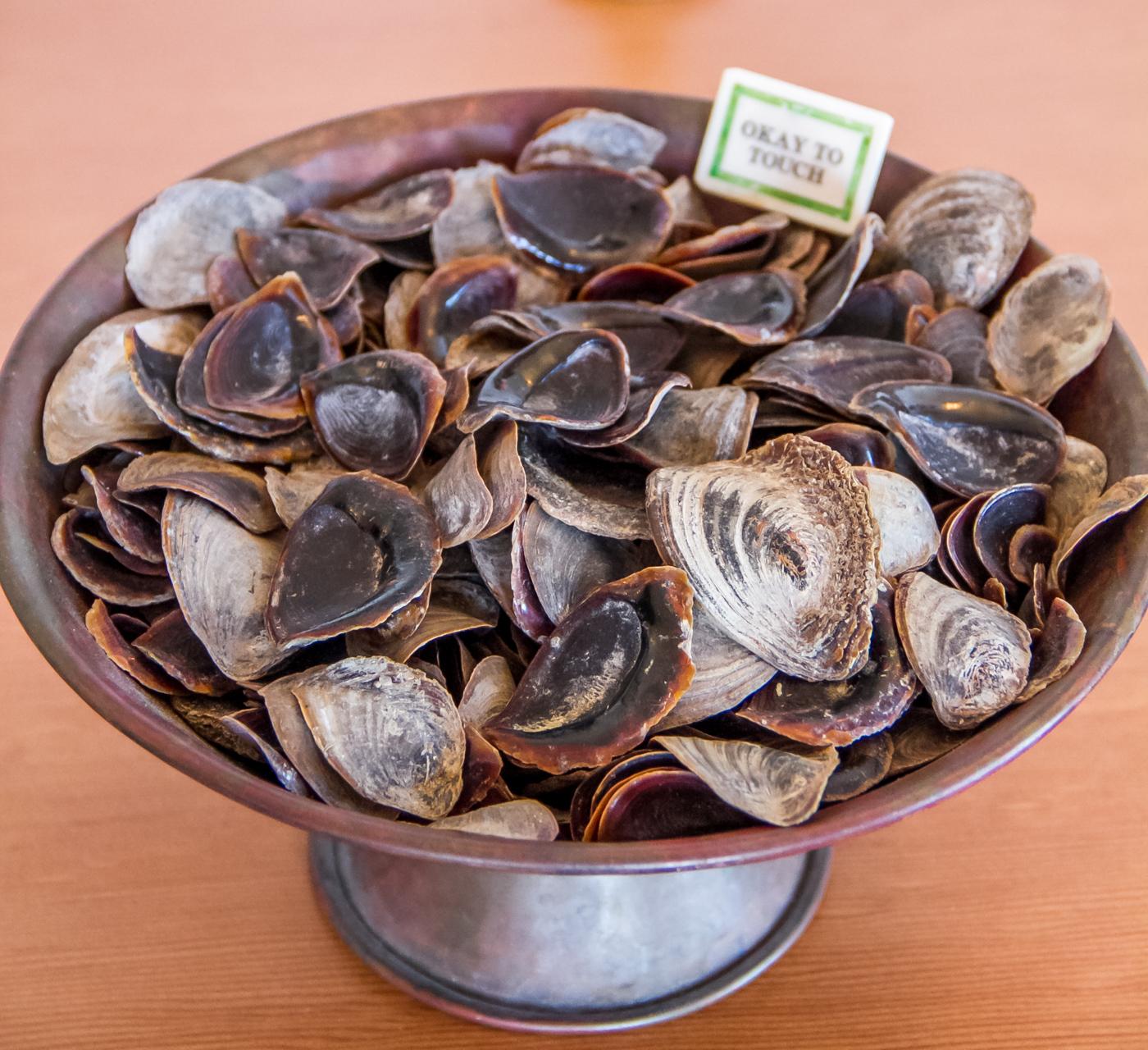 Onycha shells