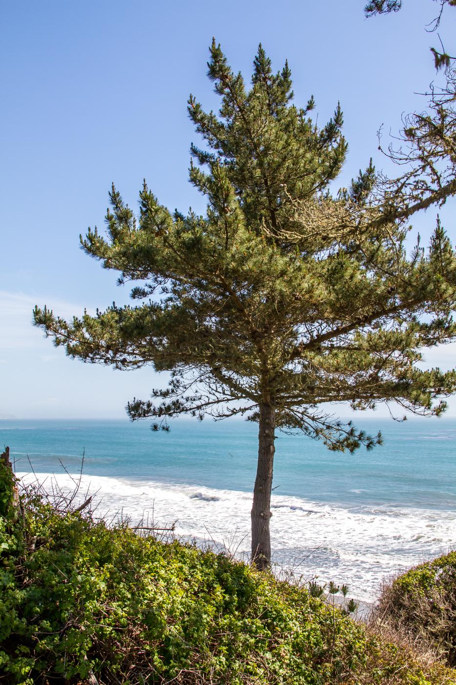 Año Nuevo State Park, Pescadero, California
