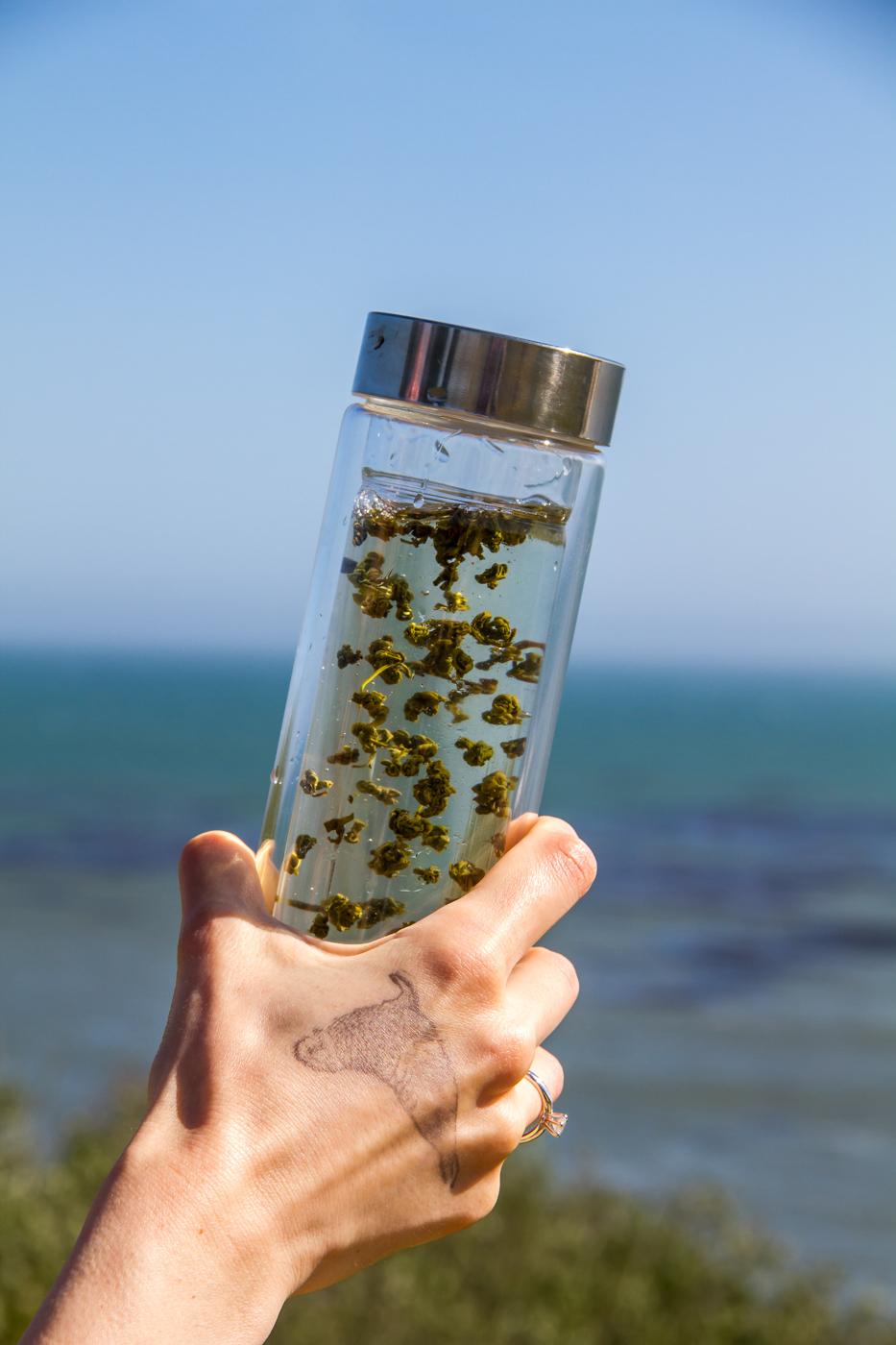 In my tea tumbler,Nepali Green Pearls by Young Mountain Tea, brewing in lukewarm water.