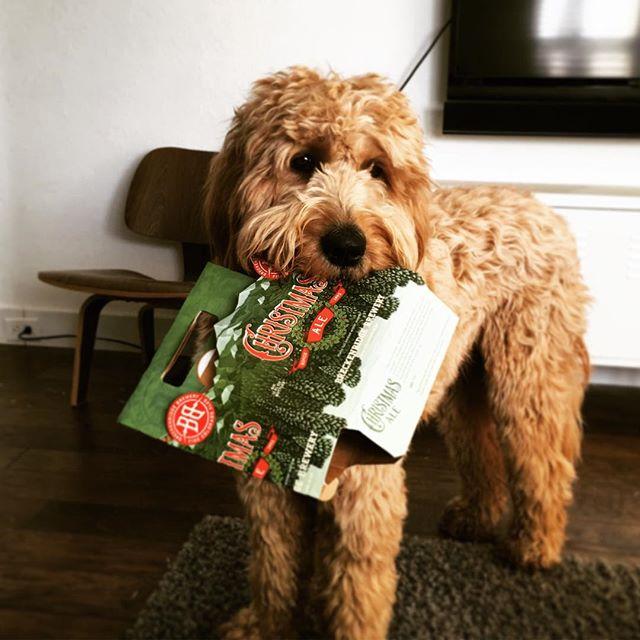 Ollie loves Christmas!