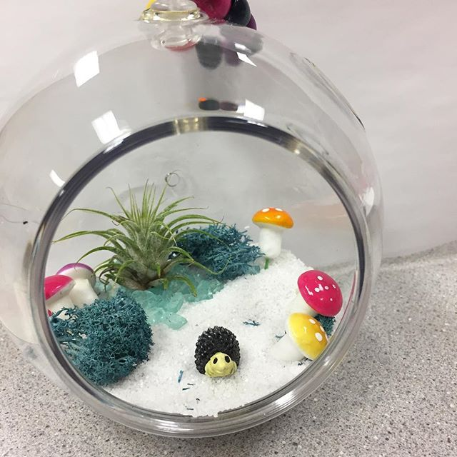 Air Plant 🌱 Terrariums with mushrooms 🍄 moss, crushed stones and tiny hedgehogs 🦔  made in our final workshops this week. #craftsforkids #thepaintedbirdcrafts #afterschoolerichment #fairfieldcountymoms #fairfieldcountykids