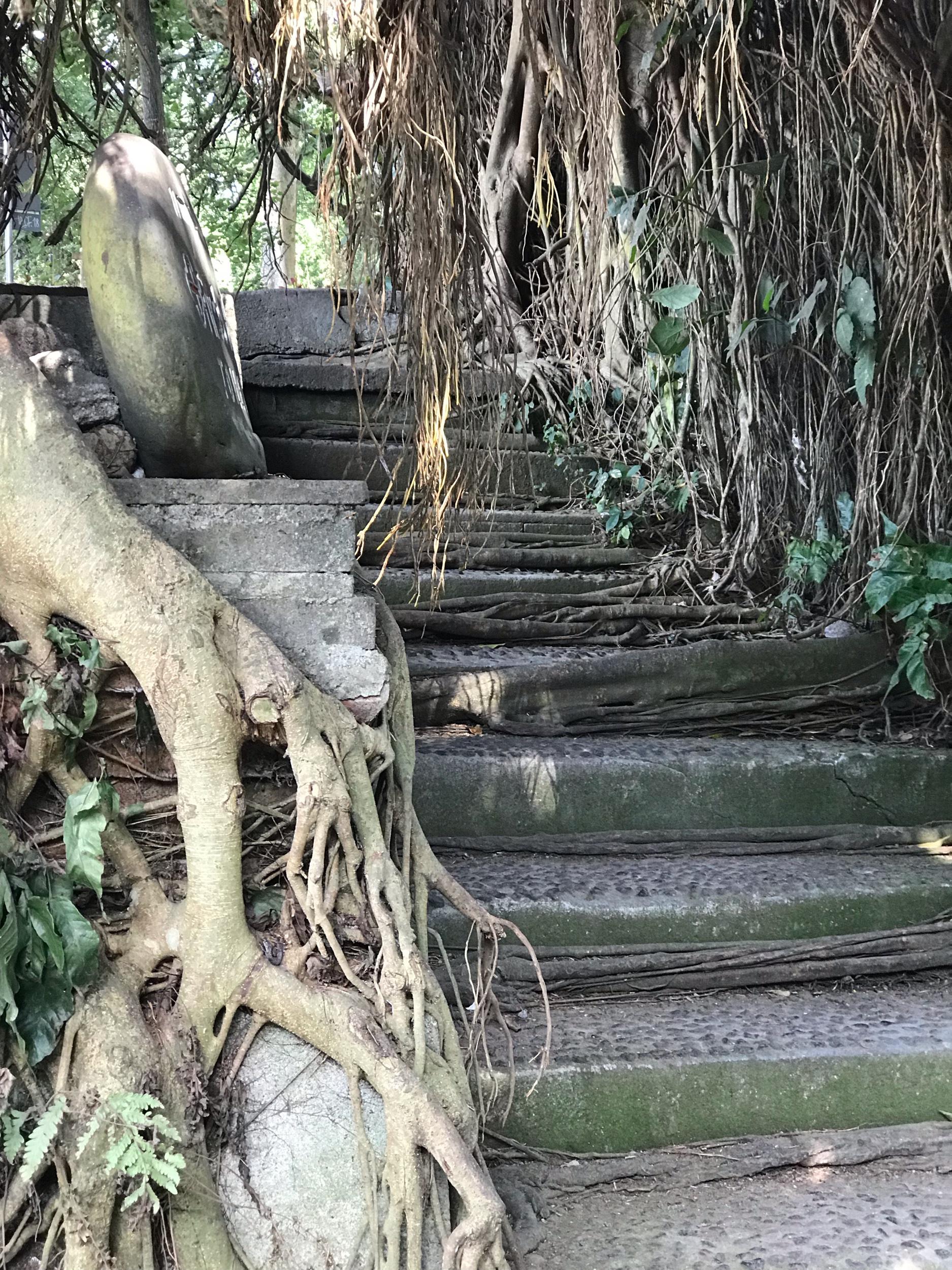 Streets to monkey forest Ubud Bali
