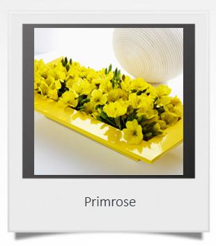 Primrose 1.jpg