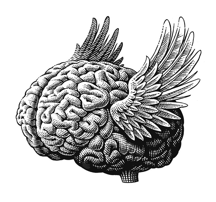 Brainfinalweb.jpg
