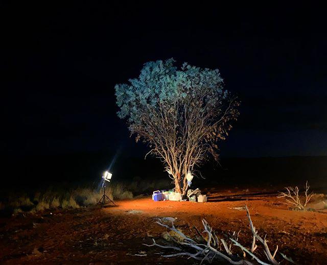 night tree, kitchen tree 🌙🌿✨